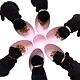 Hankyky 6-Meal Puppy,Cat, Dog, Pet, Litter Food
