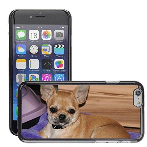 "Bild Hart Handy Schwarz Schutz Case Cover Schale Etui // M00134349 Tiere Hunde Welpen Chihuahua // Apple iPhone 6 PLUS 5.5"""