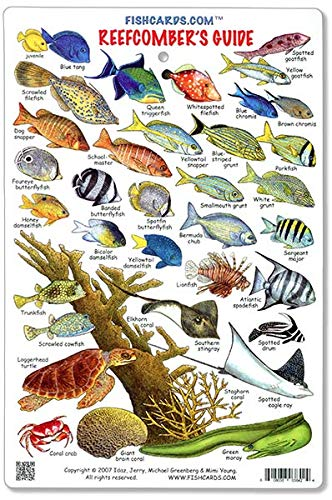 Fish ID Atlantic Caribean /& Inverterbrate /& Corals Card plastic water proof