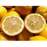 レモン 3kg 福岡県産 無農薬防腐剤防かび剤ワックス不使用