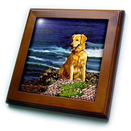 (3dRose Dogs Golden Retriever - Golden Retriever - 8x8 Framed Tile (ft_481_1))