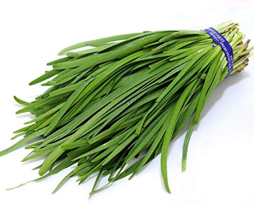 400 Garlic Chives Chinese Chives Green Organic Vegetable Seeds ~Chris's ()