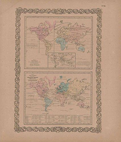 Animal Kingdom and Industry Vintage Map GW Colton 1856 Original Decor History Housewarming Gift Idea
