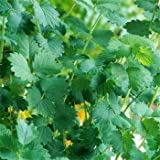 Outsidepride Salad Burnet - 1000 Seeds
