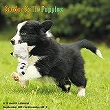 Puppies Calendar - 2017 Wall Calendars - Calendar 2016 - Dog Breed Calendars - Monthly Wall Calendar - Border Collie Puppies Calendar by Magnum
