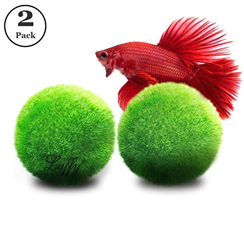 Betta fish care guide how to setup your betta fish tank for Toys for betta fish