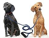 BringerPet Dual Double Dog Leash No Tangle