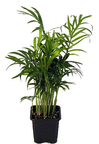 air purifying plants - 5