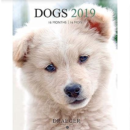 Draeger 79003076 pequeño calendario pared 14 x 18 cm perros 2019