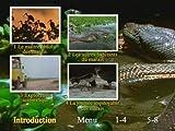 Anacondas Les Geants Du V