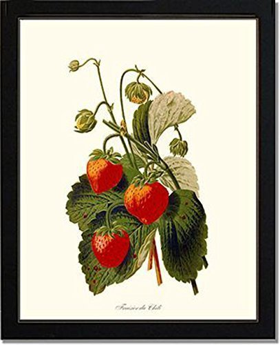 Strawberry Fruit Poster Print Strawberry Farming Gardener Gift Gardening Botany