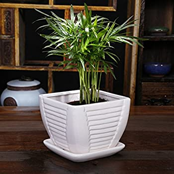 Amazon white square ceramic flower plant pot with attached white ceramic flower pot plant pot square with attached saucer with drainage holes mightylinksfo