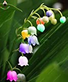 100 Pcs/bag Bell Orchid Seeds Flower Campanula Bonsai Flower Seeds Convallaria Seed Plant Pot For Home Garden