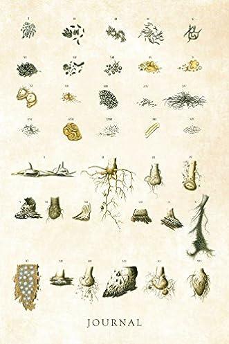 51X6zu66CXL._SX331_BO1204203200_ journal vintage botanical illustration scientific diagram of plants