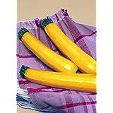 TROPICA - Zucchini - Sebring (Vegetable Marrow/Field Pumpkin/Summer Squash) (Cucurbita pepo) - 8 Seeds - Vegetable specialities