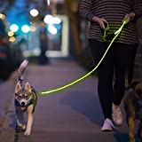 Nitey Leash - LED Lighted Pet Dog Leash (Green)