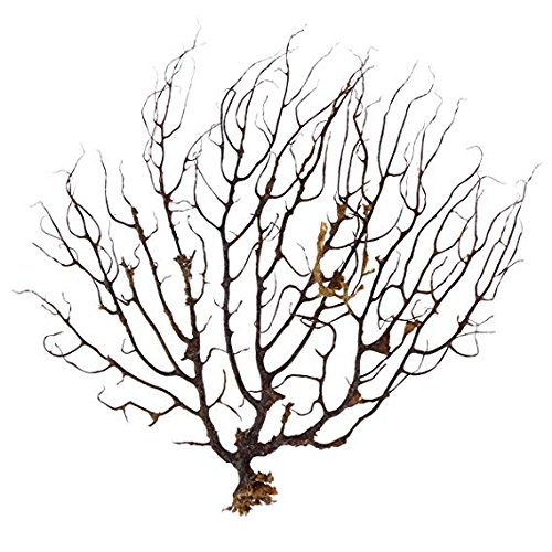 Pinsjar Black Sea Fan Fish Tank Aquarium Decoration Sea Coral Ornament ()