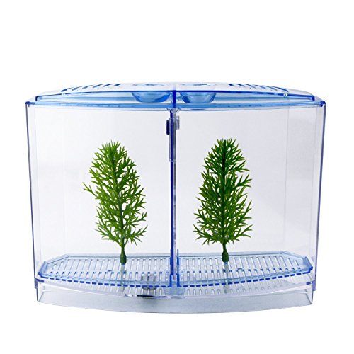 Mini Bow Desktop (Saim Betta Bow 2-Compartment Fish Tank Kit Aquarium Tank)