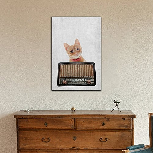 Music Intage Radio and Cat