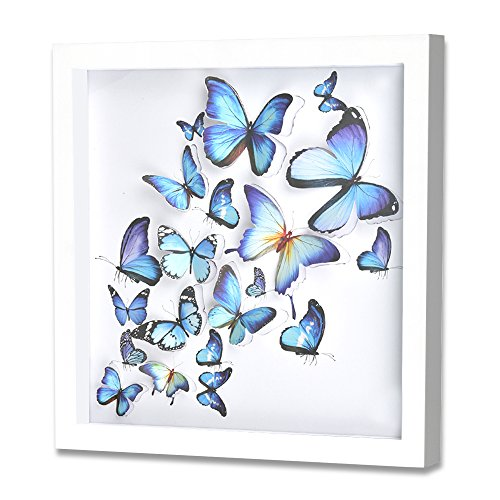 Green Frog 3D Blue Butterfly Shadow Box