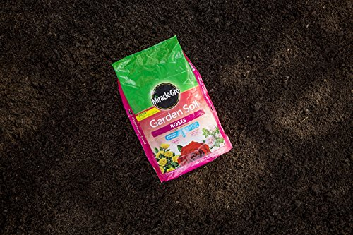 The 8 best soil amendments for roses
