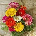 Zinnia State Fair Mix Seeds - Flower Seeds Package
