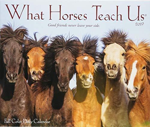 - What Horses Teach Us 2019 Box Calendar