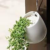 Wall-Mounted Succulent Planter,Y&M(TM)Elegance House Flower Pots Indoor Ceramic Planting Vase for Succulent and Cactus Plants