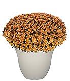 "Honeysuckle Planter, Patio Pot, 13"" Vanilla"