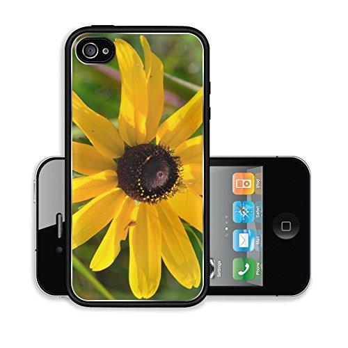 iPhone 4 4S Case Black eyed Susan Rudbeckia hirta Image 20669374145
