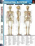 Skeletal System, SparkNotes Staff, 1586636596