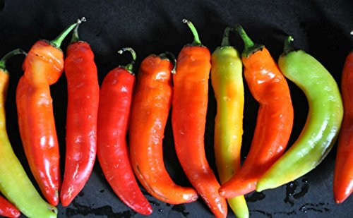 Pepper Hot Hybrid (Inferno F1 Hybrid Hot Pepper Seeds - Peppers are very hot and turn! (25 - Seeds))