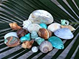 Polished Sea Shell Pack - Bight and Beautiful in Net Nautical Gift Basket - TM Nautical Crush Trading