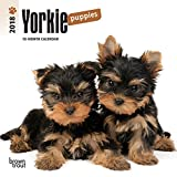 Yorkshire Terrier Puppies 2018 7 x 7 Inch Monthly Mini Wall Calendar, Animals Small Dog Breeds Terrier Puppies (Multilingual Edition)