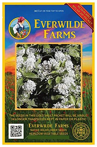 Everwilde Farms - 100 New Jersey Tea Native Wildflower Seeds - Gold Vault Jumbo Seed - New Tea Jersey Shrub