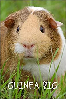 Ebooks Guinea Pig: Notebook With Animals For Kids, Notebook For Drawing And Writing (110 Pages, Unlined, 6 X 9) Descargar PDF