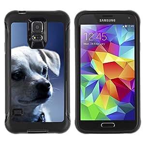 LASTONE PHONE CASE / Suave Silicona Caso Carcasa de Caucho Funda para Samsung Galaxy S5 SM-G900 / Chihuahua Puppy Serious Face Dog