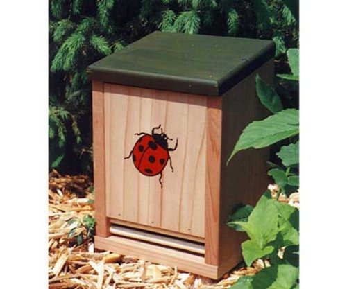Schrodt Ladybug House by Gold Crest