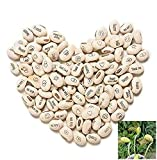 100Pcs Lot Mini Magic White Bean Seeds Gift Plant Growing Message Word Love Office Home