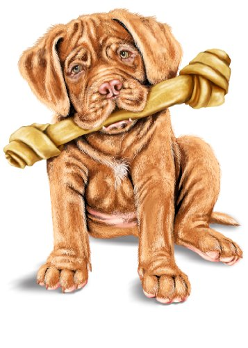 Mastiff Magnet (Cute French Mastiff Pet Puppy Dog w/ Bone - Rectangle Refrigerator Magnet)