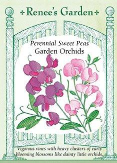 Sweet Peas - Perennial Garden Orchids Seeds (Jefferson Old Vine)