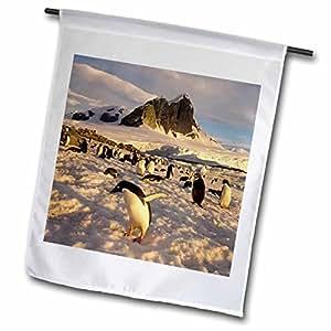 Danita Delimont - Penguins - Adelie penguin colony, western Antarctic Peninsula-AN02 SKA0498 - Steve Kazlowski - 18 x 27 inch Garden Flag (fl_74348_2)