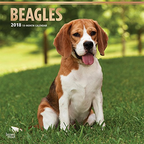 Beagles 2018 12 x 12 Inch Monthly Square Wall Calendar with Foil Stamped Cover, Animals Dog Breeds (Multilingual Edition) Wall Pocket Japan