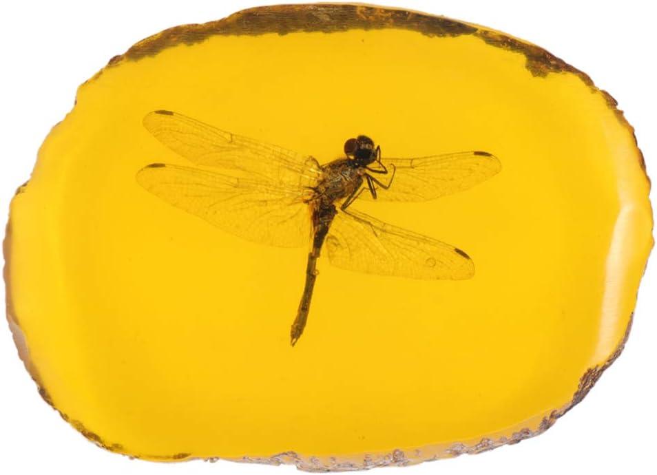 BESPORTBLE Encanto Ámbar Inclusión de Insectos Muestra de Ámbar Colgante Mariposa Escorpiones Insectos para Amigos Collar de Bricolaje Decoraciones Suéter (Libélula)