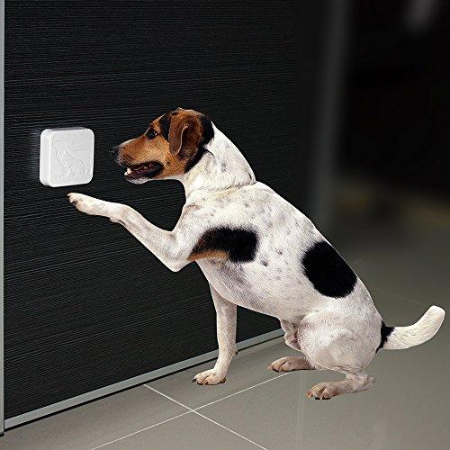 Electronic Dog Training Devices