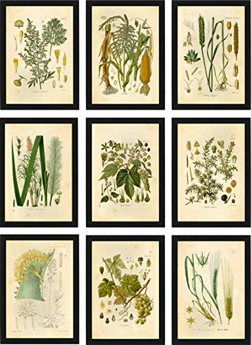 - Ink Inc Botanical Prints Alcohol Vintage Wall Art - Corn Whiskey, Hops Barley Beer, Wheat Vodka, Grapes Wine, Juniper Gin, Sugar Cane Rum, Agave Tequila, Wormwood Absinthe - Set of 9-5x7 - Matte
