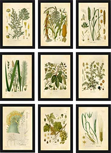 (Ink Inc Botanical Prints Alcohol Vintage Wall Art - Corn Whiskey, Hops Barley Beer, Wheat Vodka, Grapes Wine, Juniper Gin, Sugar Cane Rum, Agave Tequila, Wormwood Absinthe - Set of 9-5x7 - Matte)