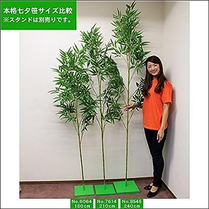 【オススメ】本格七夕笹・リアル節(210cm)  7614