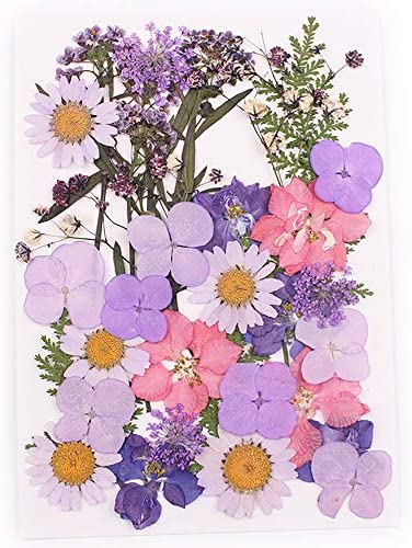 Assorted Colorful Natural Dried Flowers Colorful Daisies Leaves Hydrangeas for Art Craft DIY Resin