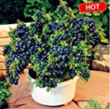200 seeds/pack Blueberry seeds Bonsai Edible fruit seed, Indoor, Outdoor Available
